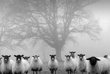 Zwart wit foto's / by Marion Wiering