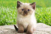 Kittens/cats ♥ / ^_^
