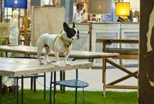 Mercanteinfiera loves dogs / Don't forget: your four-legged friends are welcome at Mercanteinfiera.