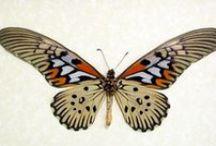 Motýli_Butterfly