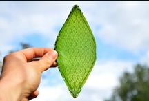 Sustainability (Green Tech, Recycle) / green things