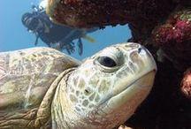 Nos vamos a las Islas Gili / Del 20 al 29 de Octubre nos vamos a bucear a las Islas Gili. Si queréis información podéis contactar a través de info@branquias.com