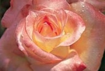 Flowers / by Morgan Rose