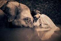 Animals / by Morgan Rose