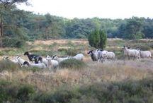 Onze kudde / De schaapskudde van Purewol