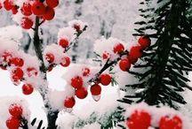 Winter as it is❄️⛄️