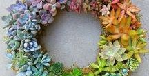 Succulent Idea Board / Great ideas for planters, decorations, terrariums, and other projects.