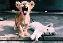 Animals / Animals / Pets / Cute