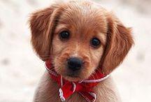 We Love Pets | Atlantic House / Atlantic House Apartments in Midtown is a pet-friendly community!