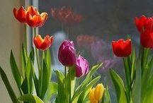 Apartment Gardening | Atlantic House / Ideas for apartment gardening in your future home at Atlantic House in Atlanta's Midtown District