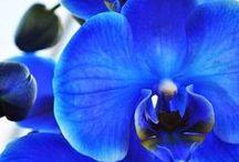 Fiori  e  Giardinaggio / Creazioni per abbellire il vostro giardino