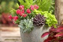 Gardening & Landscaping / by Cynthia Nevin
