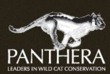 Wildlife Conservation Organisations / This is a list of some of prominent conservation organisation is South Africa