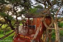Southern African Safari Destinations / Some of the top safari destinations in South Africa