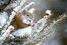 on winter