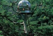 Unique Tree Houses / Different kinds of tree houses