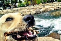 "Living in Reno / Entries for the 2013 ""Living in Reno"" Photo Contest.  The winners (voted by City Council) are: Lightning Over Reno by Aaron Loar -- Winner of People's Choice; Couple sitting at Wingfield Park by Darron Birgenheier -- First place; My service dog Nala playing at the Truckee River  by Timothy Conzachi -- Second Place; and Overlooking the Truckee Meadows by Patricia Deakin -- Third Place. Please visit Reno.gov/LivingInReno for complete contest details."
