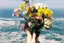 Flor e cor.