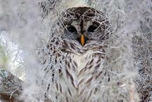 Nature and Wildlife / Simply stunning