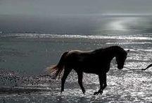 i like horses