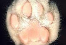 Cat Paw / Katze Pfoten / Kedi Patisi