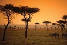 Afrika / by Inge Borg