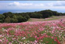 Flower / Landscape