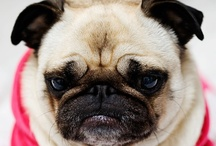 Pug Mugs / Our pug, Tinta, has stolen our hearts for all pugs. Enjoy.  / by Christina Roy