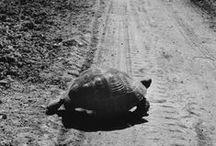Turtlez ||