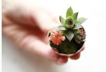 plantas | flores / by BUJI