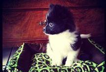 Henry | My h▲ppy Dog || / Henry - my sweet little pomeranian ❤