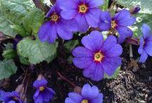 kasvit ja puutarha / Mielenkiintoista viherpeukalointia