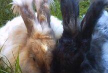 Eläimet pareittain, animals in pairs / two animals
