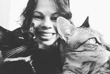 Gatos / Só gatos lindos e travessos