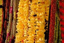 Hawaiian Lei / Beautiful images of traditional lei and lei plants from Hawaii seen on rainforest walks
