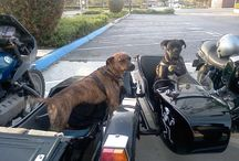 Dogs 'n Motos / by Sherry Moore