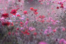 Power of flowers / Le pouvoir des fleurs