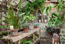 garden ideas / what grows in my garden & what I would like in my garden!
