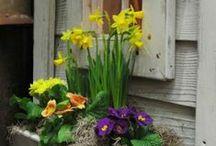 At last........Spring