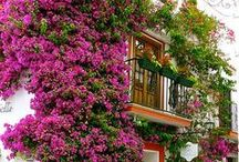 Marbella / #Marbella #Andalucia #España