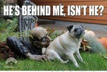 Hilarious Halloween Memes, Comics and Humor / Howling with laughter is second to none when it comes to Halloween humor.