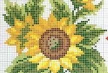 keresztszemes virágok