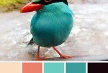 Color / Color inspirations