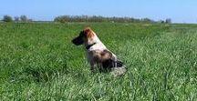 Chica / My Spanish rescue dog