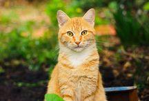 I LOVE CATS! / by Kim Porter