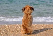 By the sea ...