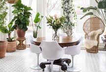 Plants & Flowers | House Plants