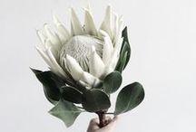 Proteas   Orchids   Floral Arrangements