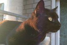 Cat Cleo