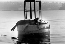 Animals / From the King County Archives / by King County Archives